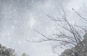 「冬季うつ」~冬に気持ちが落ち込む季節性うつ病~