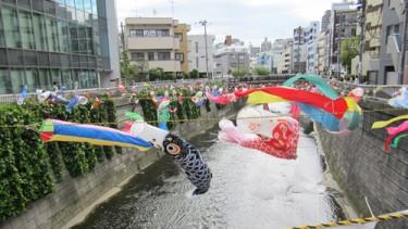 強い風に踊る鯉のぼり